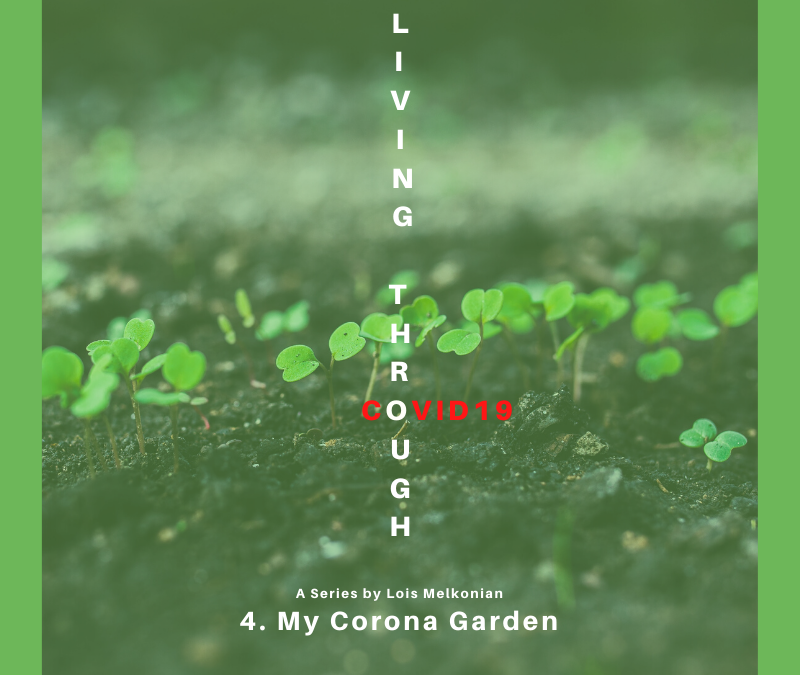 My Corona Garden – Living Through COVID19